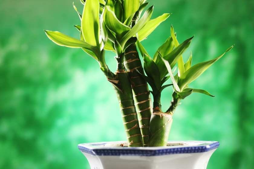 the advantages of indoor plant growing Eating plants isn't the only way to reap their benefits  ivies can be grown at the  base of other houseplants or in hanging baskets on their own.